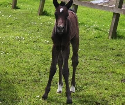Spring foal