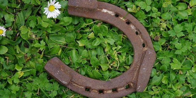 700-300horseshoe on grass