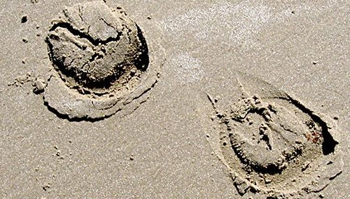 700x400hooves in sand